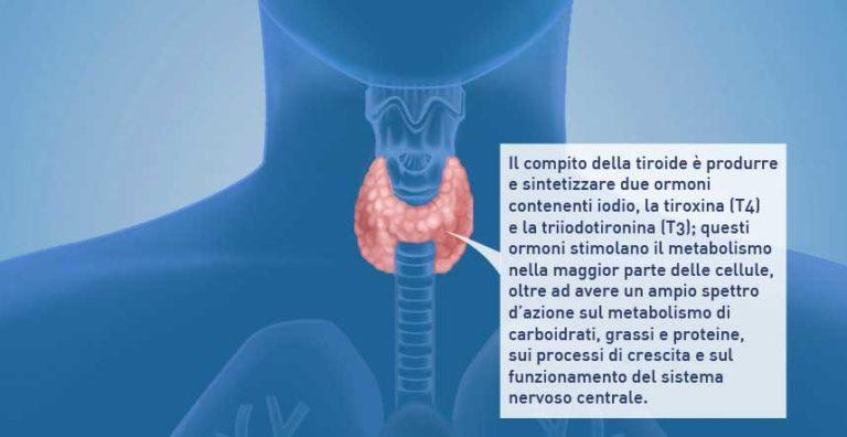 Come è fatta la tiroide e dove si trova