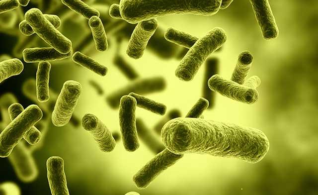 Helicobacter Pylori e ipotiroidismo: ce ne parla il Prof. Vaira Dino