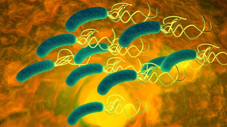 Helicobacter: a rischio la terapia dell'ipotiroidismo