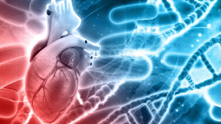 """Nel postinfarto i farmaci Omega-3 """"rimodellano"""" il cuore"""
